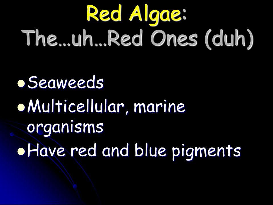 Red Algae: The…uh…Red Ones (duh) Seaweeds Seaweeds Multicellular, marine organisms Multicellular, marine organisms Have red and blue pigments Have red