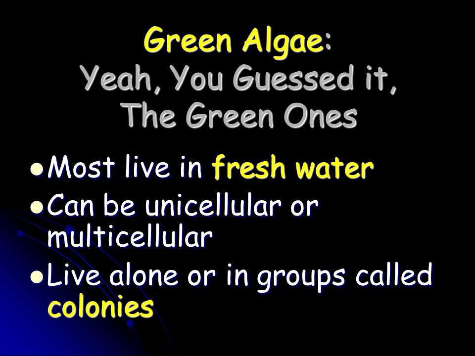 Green Algae: Yeah, You Guessed it, The Green Ones Most live in fresh water Most live in fresh water Can be unicellular or multicellular Can be unicell