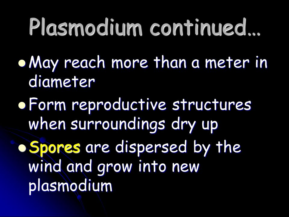 Plasmodium continued… May reach more than a meter in diameter May reach more than a meter in diameter Form reproductive structures when surroundings d