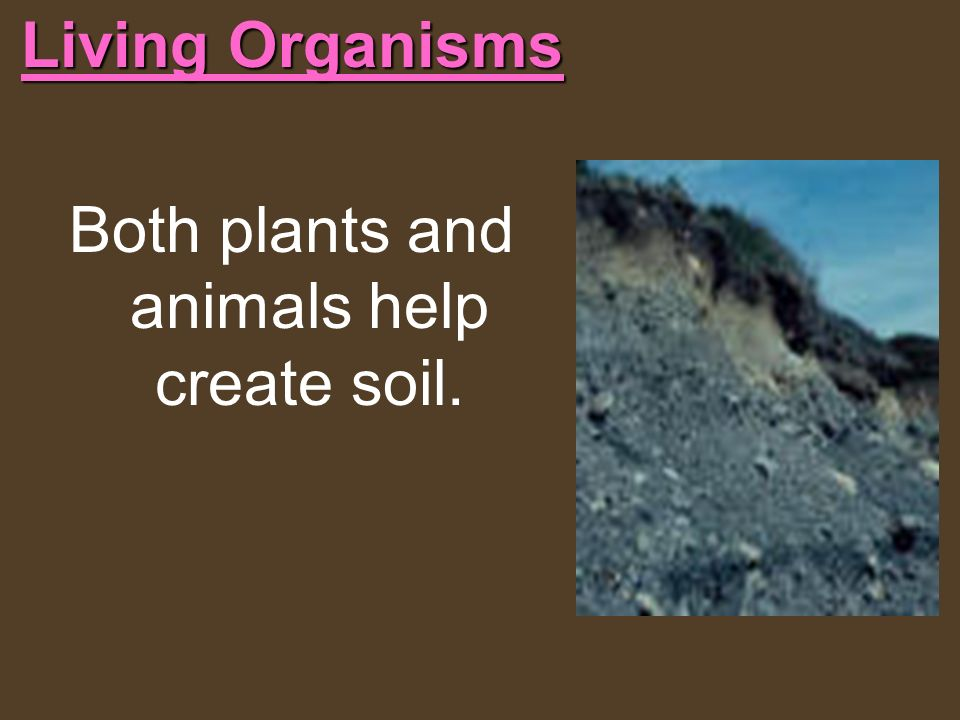 Living Organisms Both plants and animals help create soil.