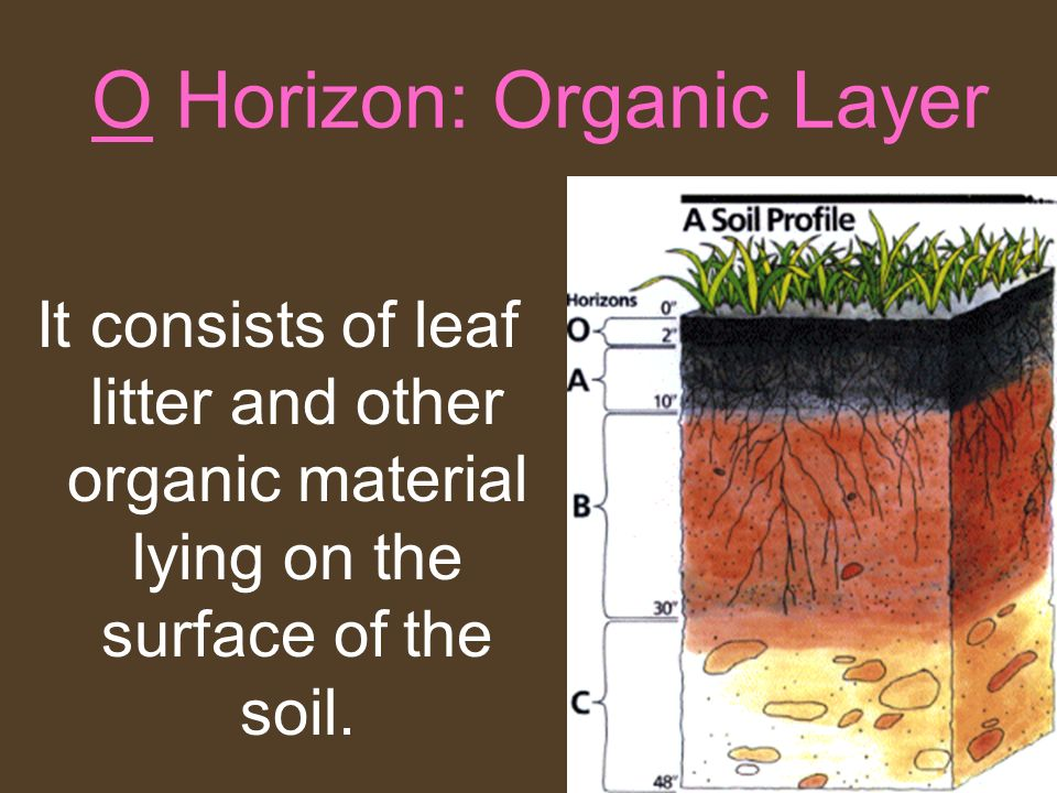 O Horizon: Organic Layer It consists of leaf litter and other organic material lying on the surface of the soil.