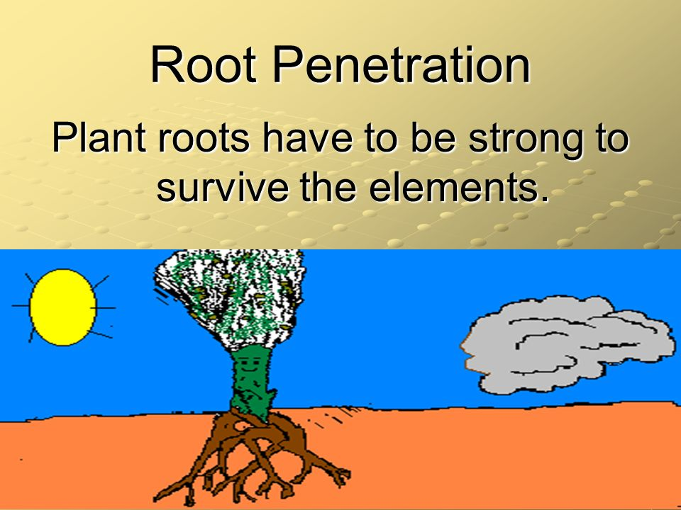 Root Penetration Plant roots have to be strong to survive the elements.