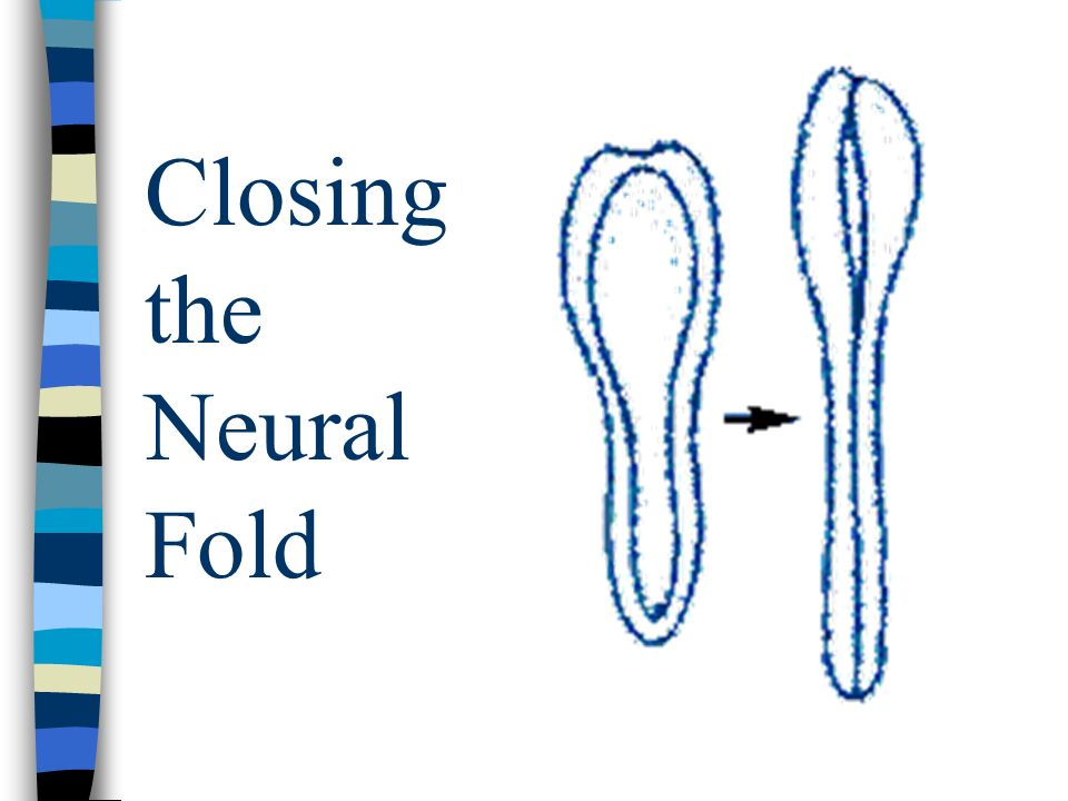 Closing the Neural Fold