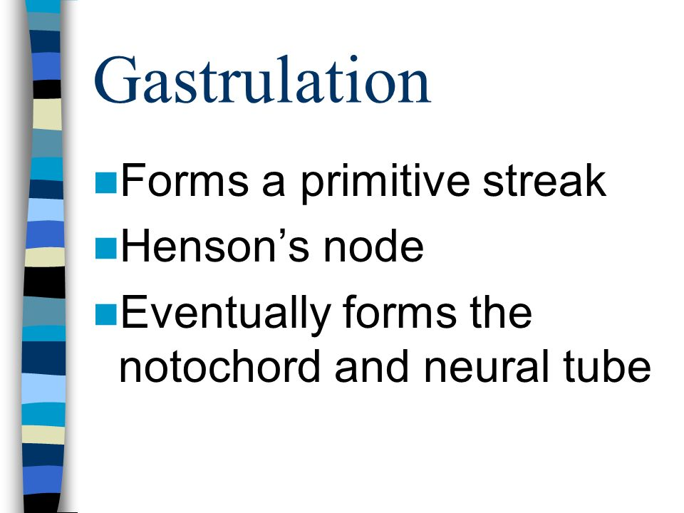 Gastrulation Forms a primitive streak Hensons node Eventually forms the notochord and neural tube