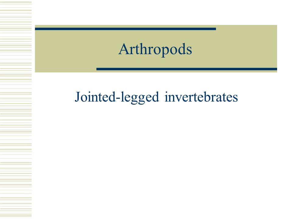 Arthropods Jointed-legged invertebrates