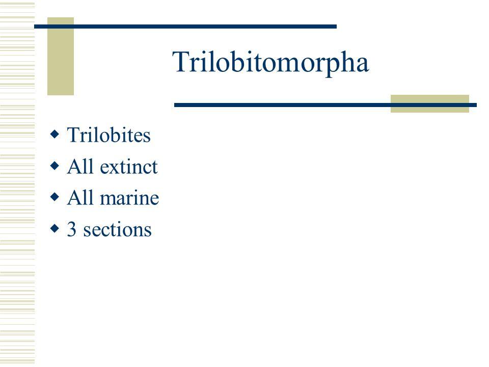 Trilobitomorpha Trilobites All extinct All marine 3 sections