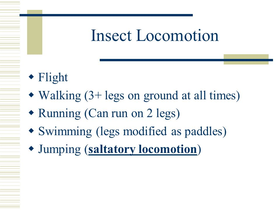 Insect Locomotion Flight Walking (3+ legs on ground at all times) Running (Can run on 2 legs) Swimming (legs modified as paddles) Jumping (saltatory l