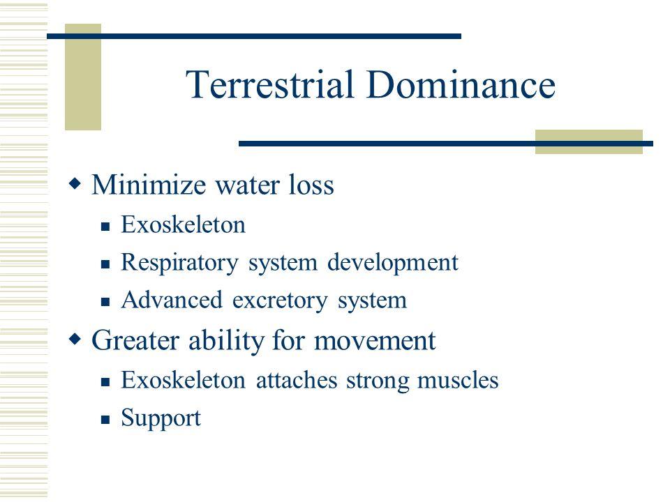 Terrestrial Dominance Minimize water loss Exoskeleton Respiratory system development Advanced excretory system Greater ability for movement Exoskeleto