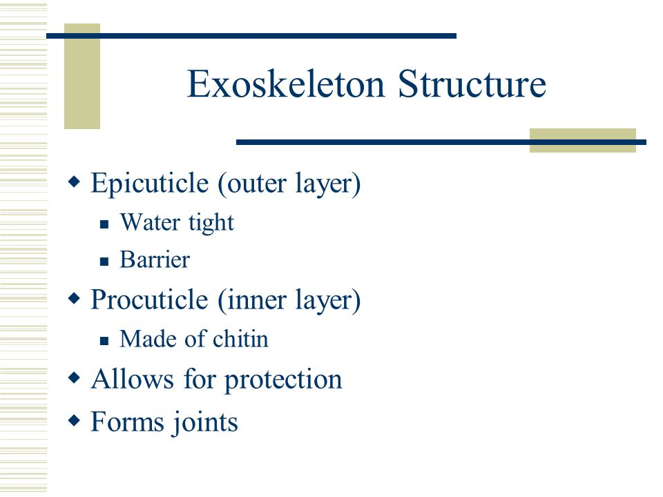 Exoskeleton Structure Epicuticle (outer layer) Water tight Barrier Procuticle (inner layer) Made of chitin Allows for protection Forms joints