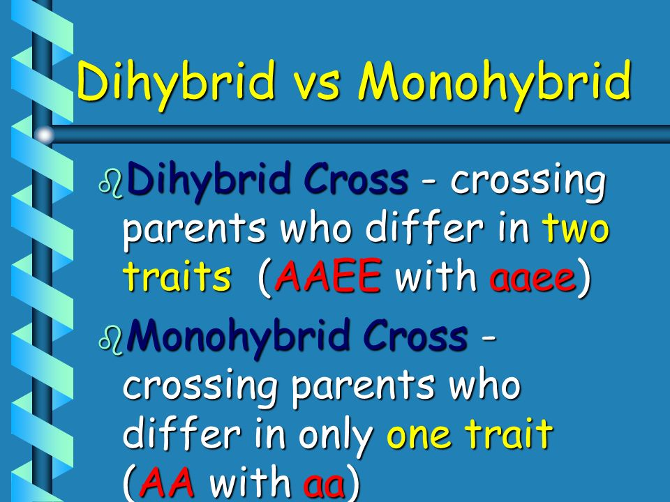 Dihybrid vs Monohybrid b Dihybrid Cross - crossing parents who differ in two traits (AAEE with aaee) b Monohybrid Cross - crossing parents who differ
