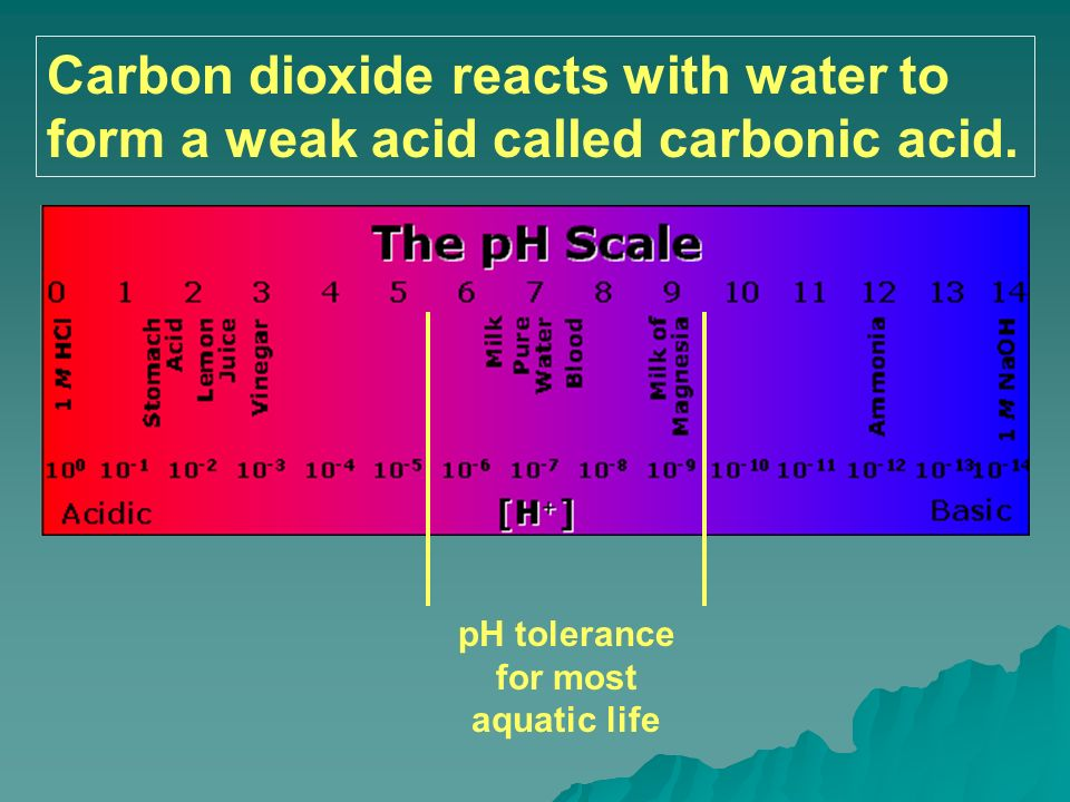 Carbon dioxide reacts with water to form a weak acid called carbonic acid. pH tolerance for most aquatic life