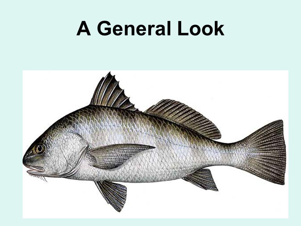 A General Look