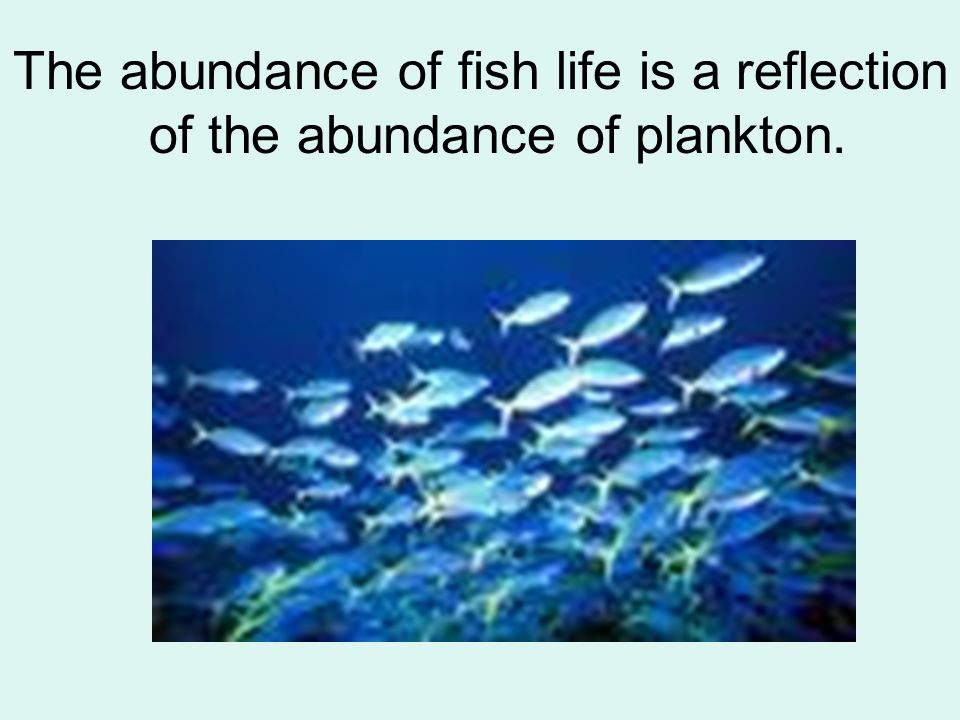 The abundance of fish life is a reflection of the abundance of plankton.