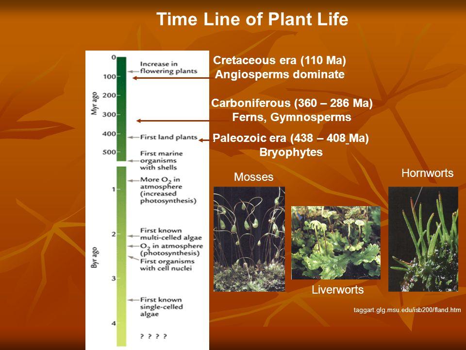 Time Line of Plant Life Paleozoic era (438 – 408 Ma) Bryophytes Cretaceous era (110 Ma) Angiosperms dominate Carboniferous (360 – 286 Ma) Ferns, Gymno