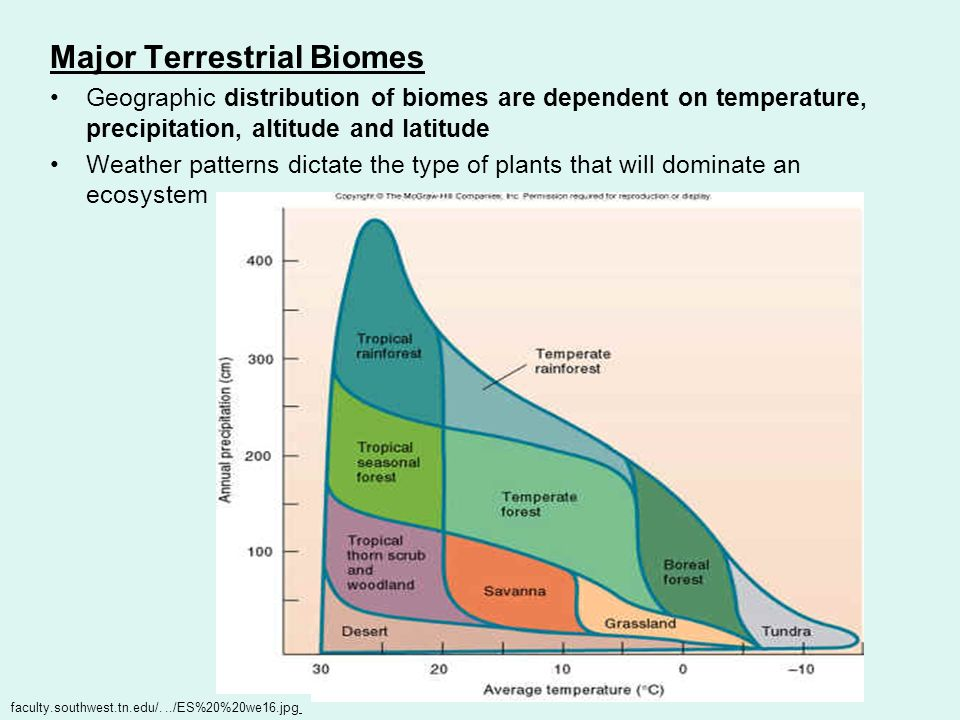 Major Terrestrial Biomes Geographic distribution of biomes are dependent on temperature, precipitation, altitude and latitude Weather patterns dictate