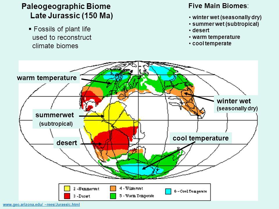 Paleogeographic Biome Late Jurassic (150 Ma) www.geo.arizona.edu/ ~rees/Jurassic.html Five Main Biomes: winter wet (seasonally dry) summer wet (subtro