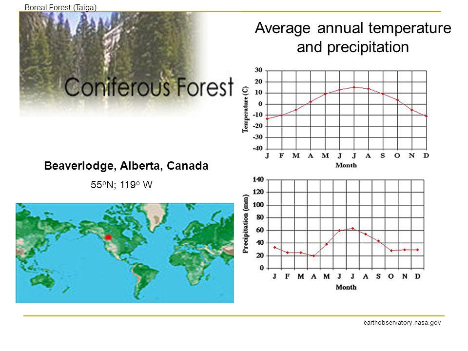 Beaverlodge, Alberta, Canada earthobservatory.nasa.gov Boreal Forest (Taiga) Average annual temperature and precipitation 55 o N; 119 o W