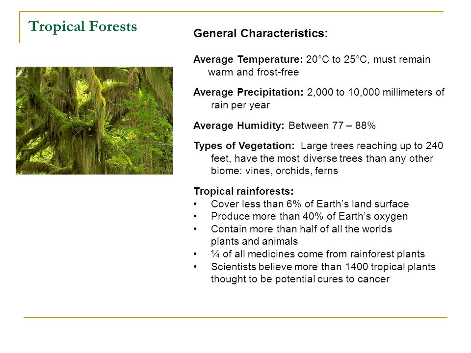 Tropical Forests General Characteristics: Average Temperature: 20°C to 25°C, must remain warm and frost-free Average Precipitation: 2,000 to 10,000 mi
