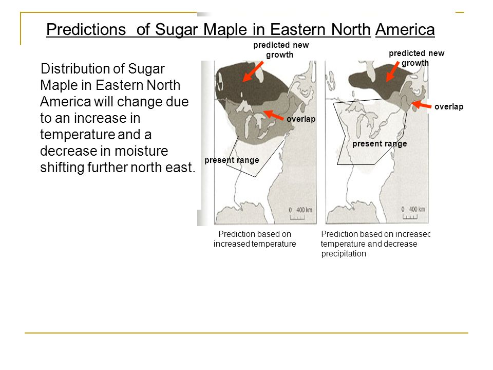 Distribution of Sugar Maple in Eastern North America will change due to an increase in temperature and a decrease in moisture shifting further north e