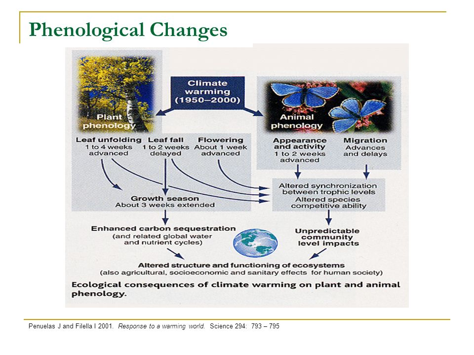 Phenological Changes Penuelas J and Filella I 2001. Response to a warming world. Science 294: 793 – 795