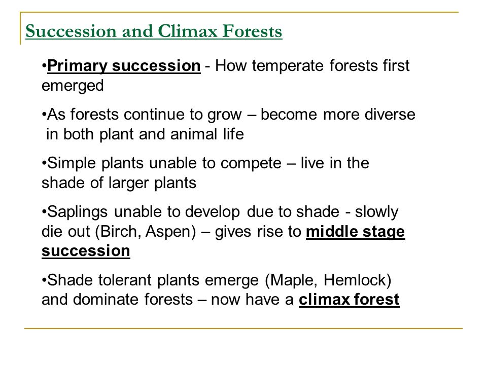 Succession and Climax Forests Primary succession - How temperate forests first emerged As forests continue to grow – become more diverse in both plant