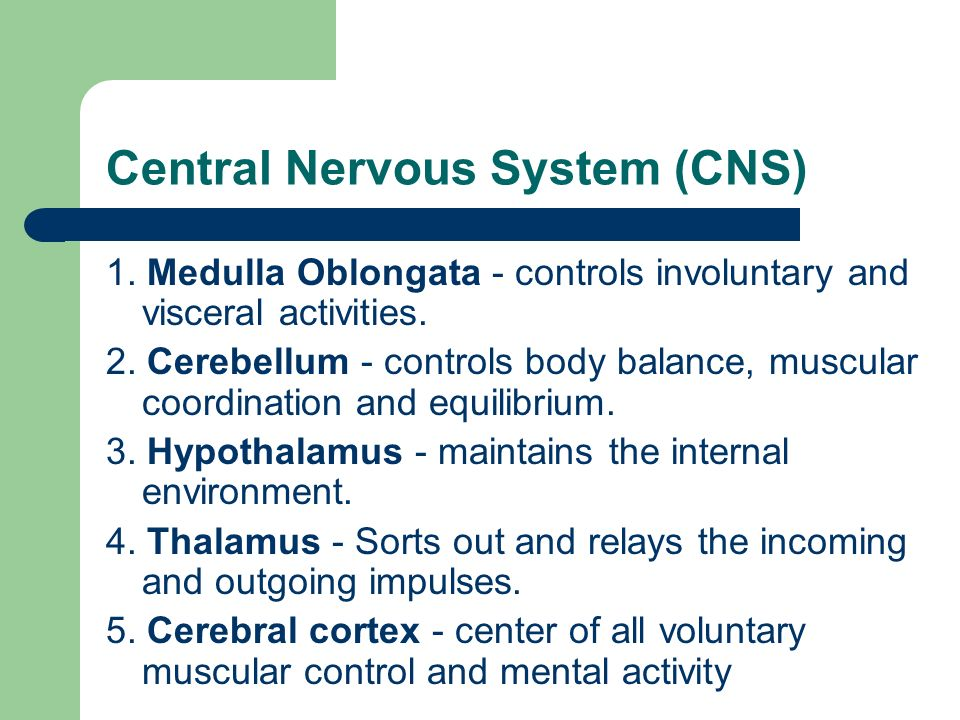 Central Nervous System (CNS) 1.Medulla Oblongata - controls involuntary and visceral activities.