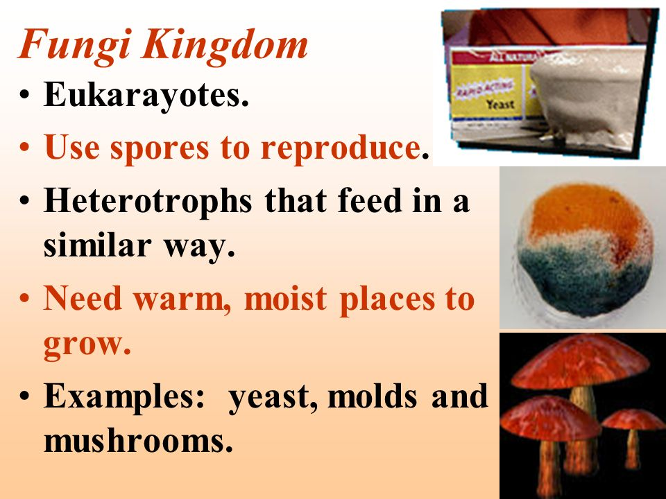 Fungi Kingdom Eukarayotes. Use spores to reproduce. Heterotrophs that feed in a similar way. Need warm, moist places to grow. Examples: yeast, molds a
