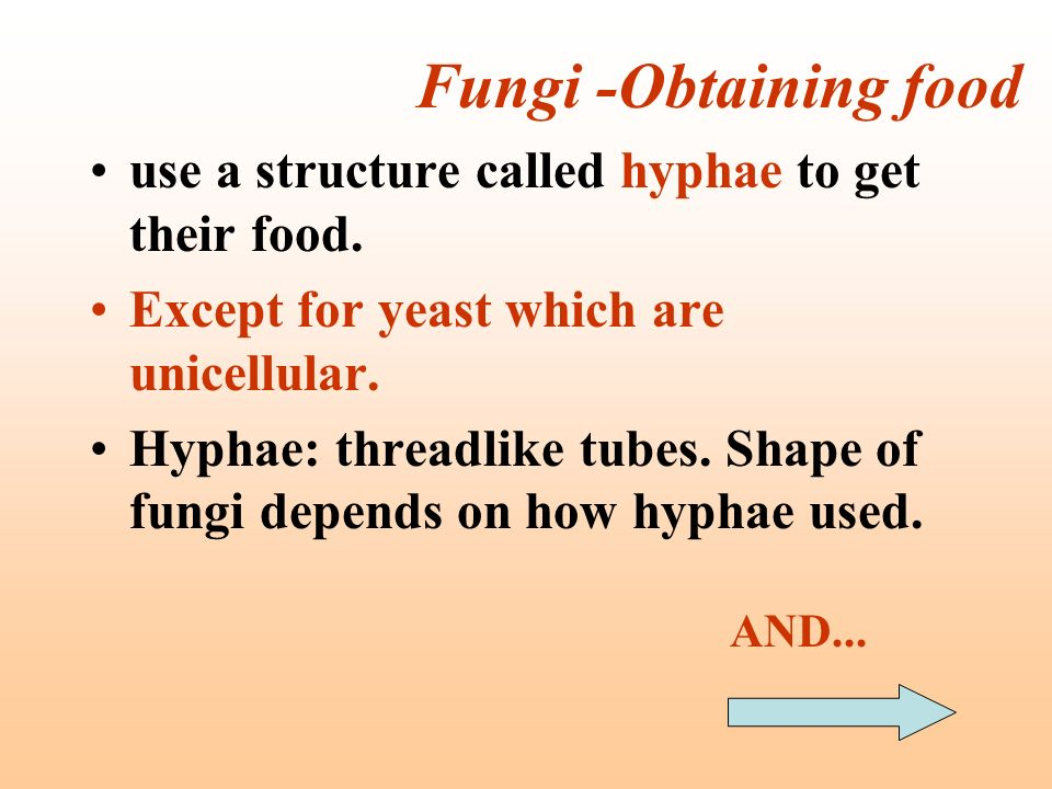 Fungi -Obtaining food use a structure called hyphae to get their food. Except for yeast which are unicellular. Hyphae: threadlike tubes. Shape of fung