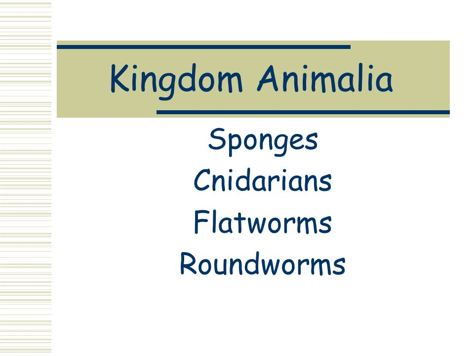 Kingdom Animalia Sponges Cnidarians Flatworms Roundworms