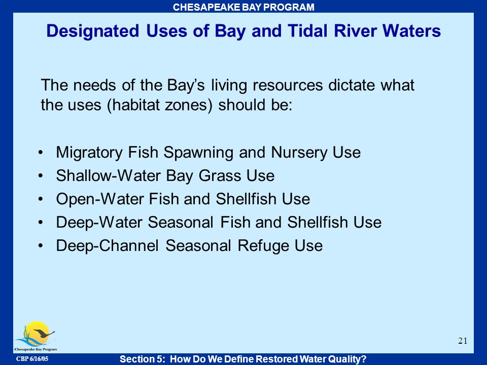 CBP 6/16/05 CHESAPEAKE BAY PROGRAM 21 Designated Uses of Bay and Tidal River Waters The needs of the Bays living resources dictate what the uses (habi