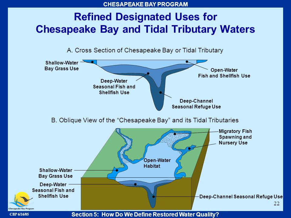 CBP 6/16/05 CHESAPEAKE BAY PROGRAM 22 A. Cross Section of Chesapeake Bay or Tidal Tributary B. Oblique View of the Chesapeake Bay and its Tidal Tribut