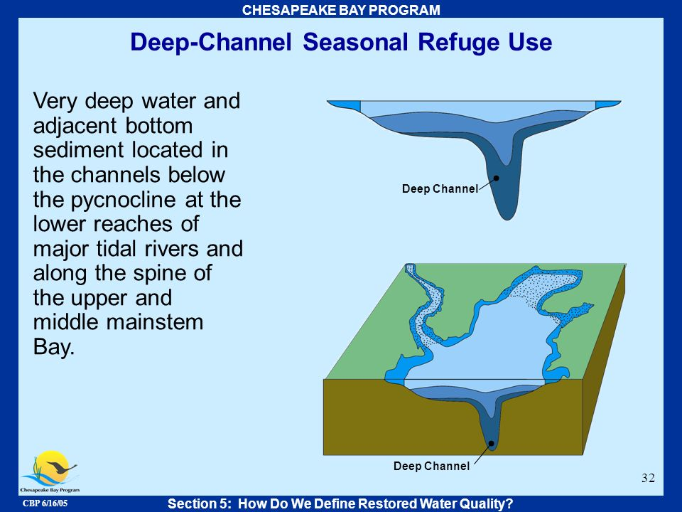 CBP 6/16/05 CHESAPEAKE BAY PROGRAM 32 Deep-Channel Seasonal Refuge Use Very deep water and adjacent bottom sediment located in the channels below the
