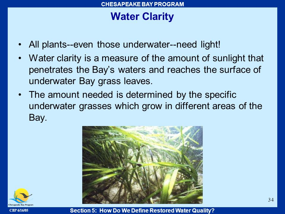 CBP 6/16/05 CHESAPEAKE BAY PROGRAM 34 Water Clarity All plants--even those underwater--need light! Water clarity is a measure of the amount of sunligh