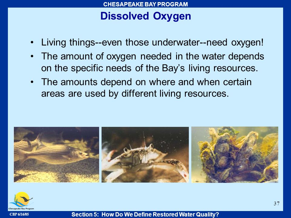 CBP 6/16/05 CHESAPEAKE BAY PROGRAM 37 Dissolved Oxygen Living things--even those underwater--need oxygen! The amount of oxygen needed in the water dep