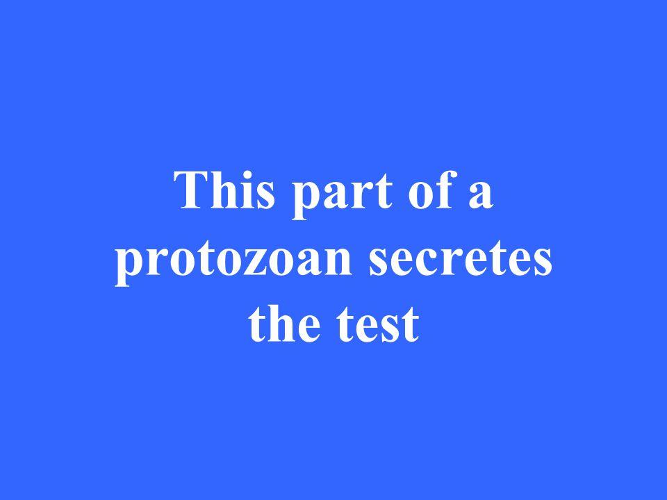 This part of a protozoan secretes the test