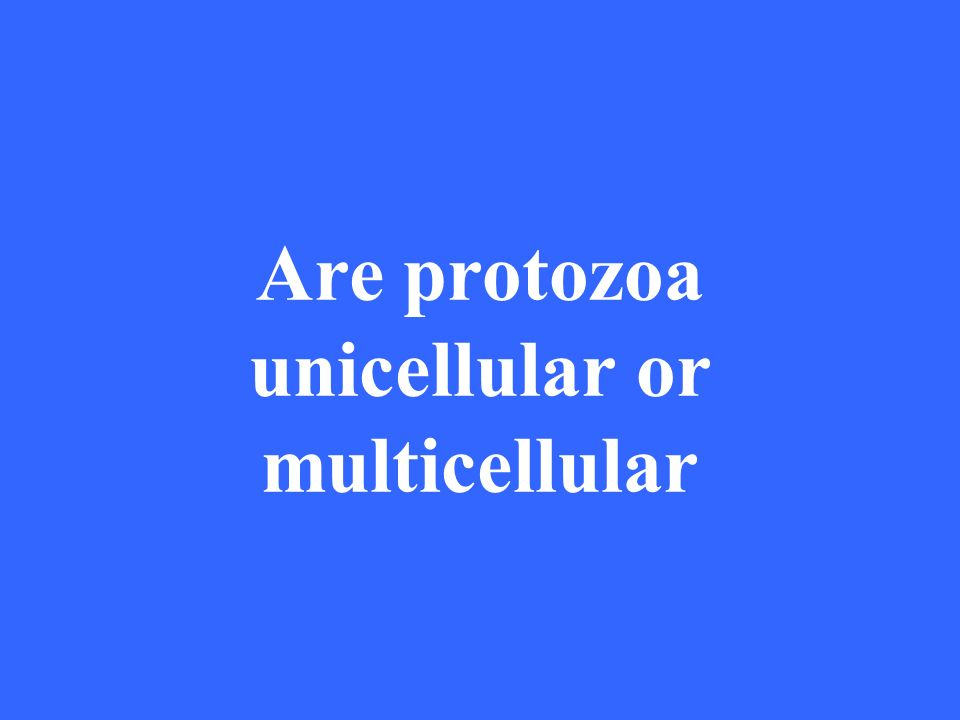 Are protozoa unicellular or multicellular