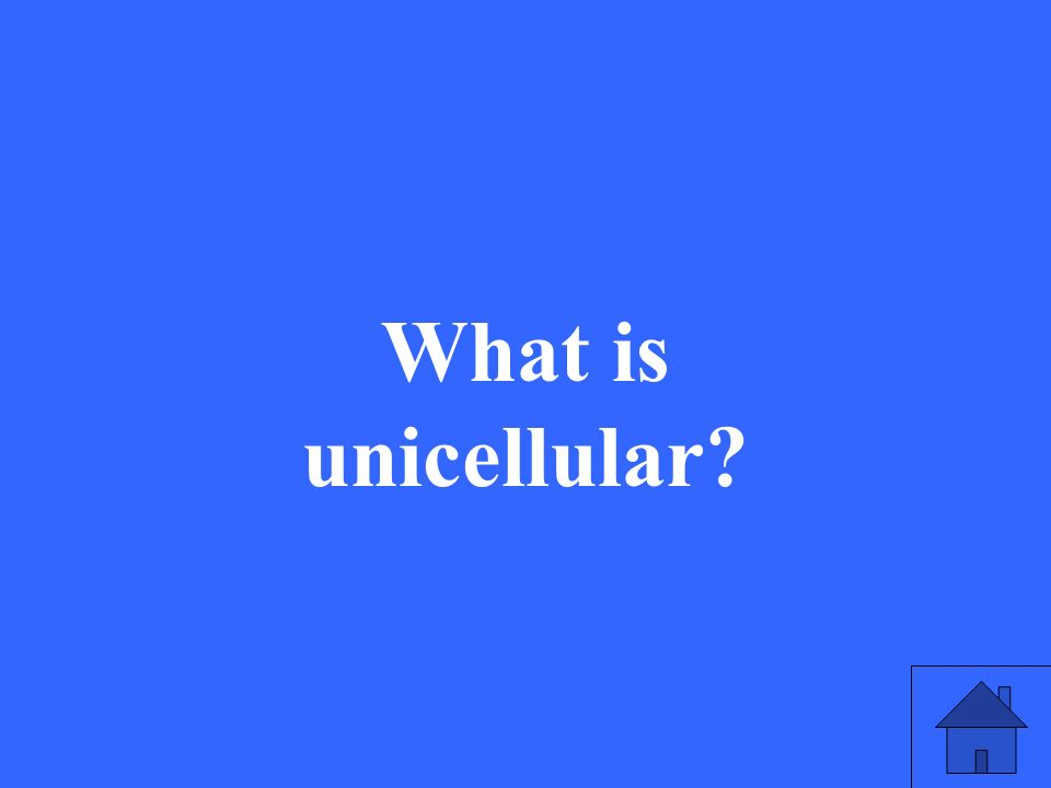 What is unicellular?