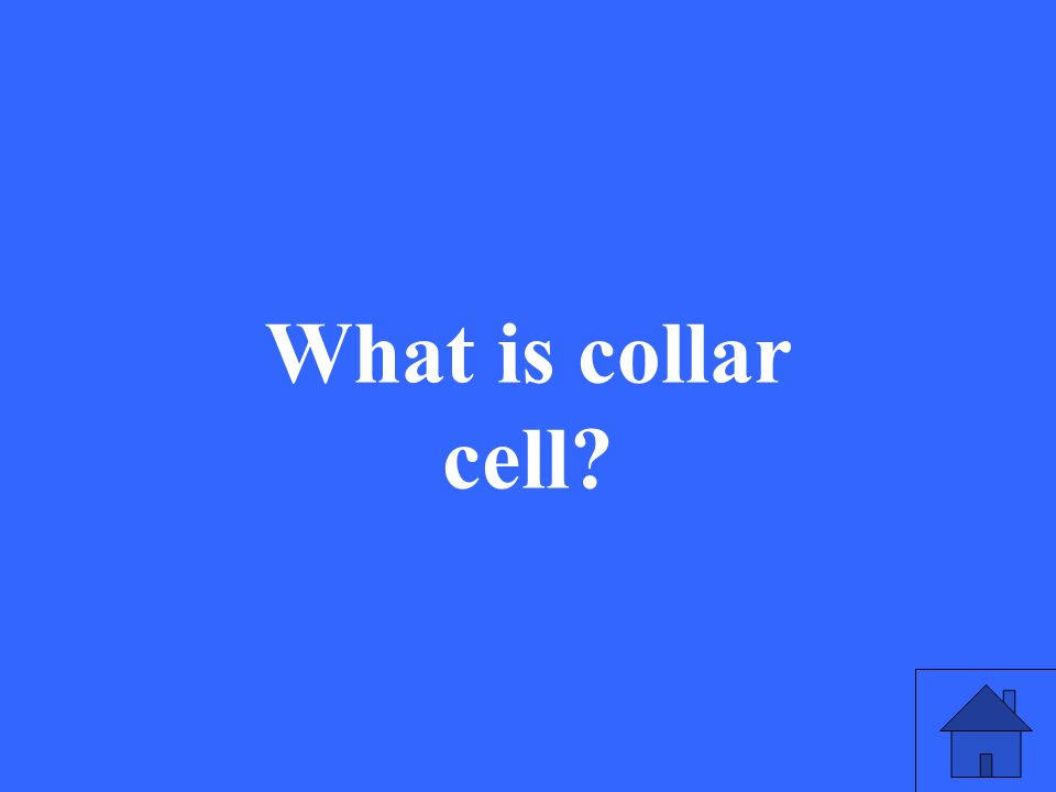 What is collar cell?