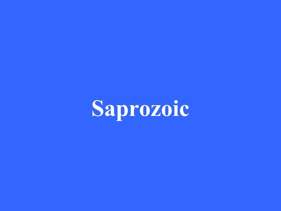 Saprozoic