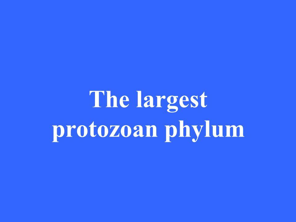 The largest protozoan phylum