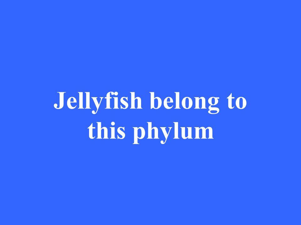 Jellyfish belong to this phylum