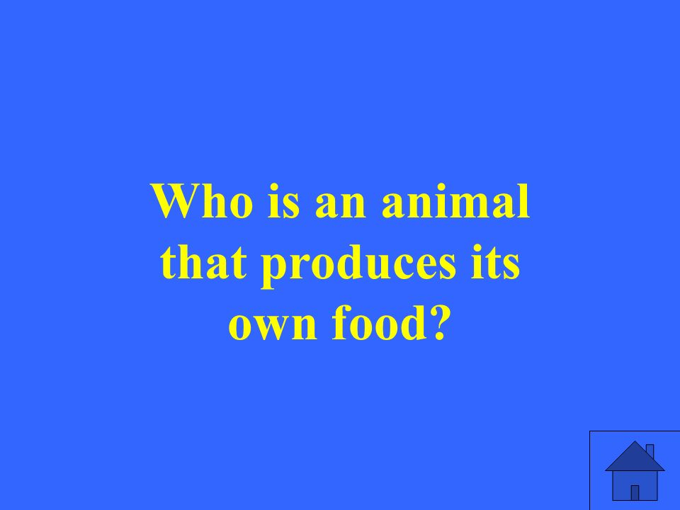 Who is an animal that produces its own food?