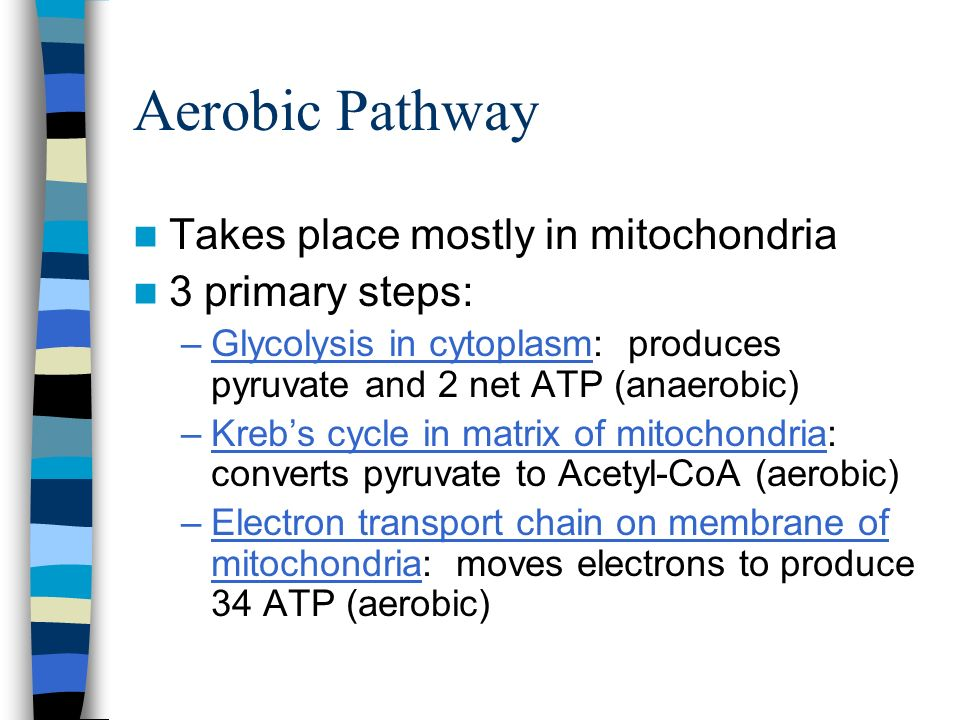 Aerobic Pathway Takes place mostly in mitochondria 3 primary steps: –Glycolysis in cytoplasm: produces pyruvate and 2 net ATP (anaerobic) –Krebs cycle