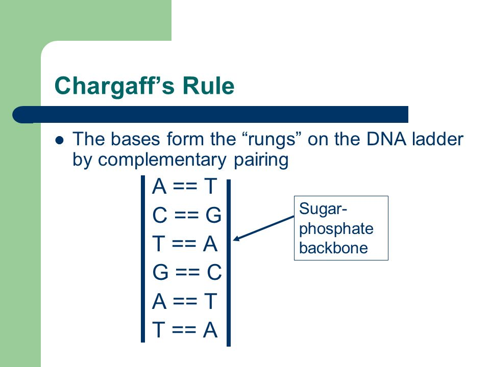 Chargaffs Rule The bases form the rungs on the DNA ladder by complementary pairing A == T C == G T == A G == C A == T T == A Sugar- phosphate backbone