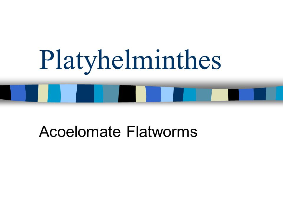 Platyhelminthes Acoelomate Flatworms