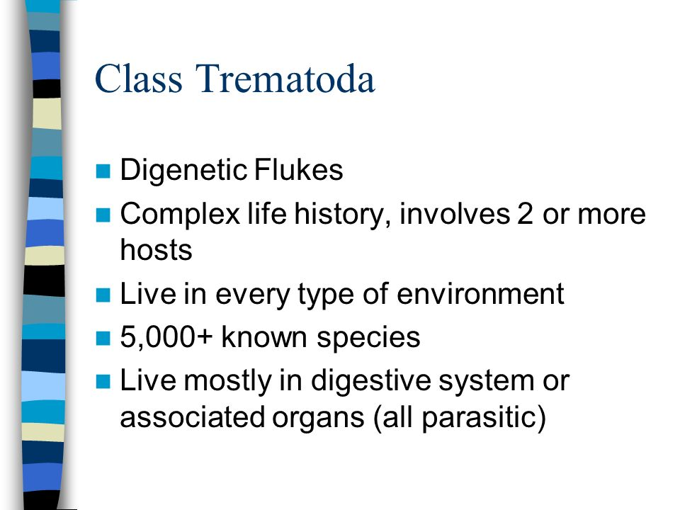 Class Trematoda Digenetic Flukes Complex life history, involves 2 or more hosts Live in every type of environment 5,000+ known species Live mostly in
