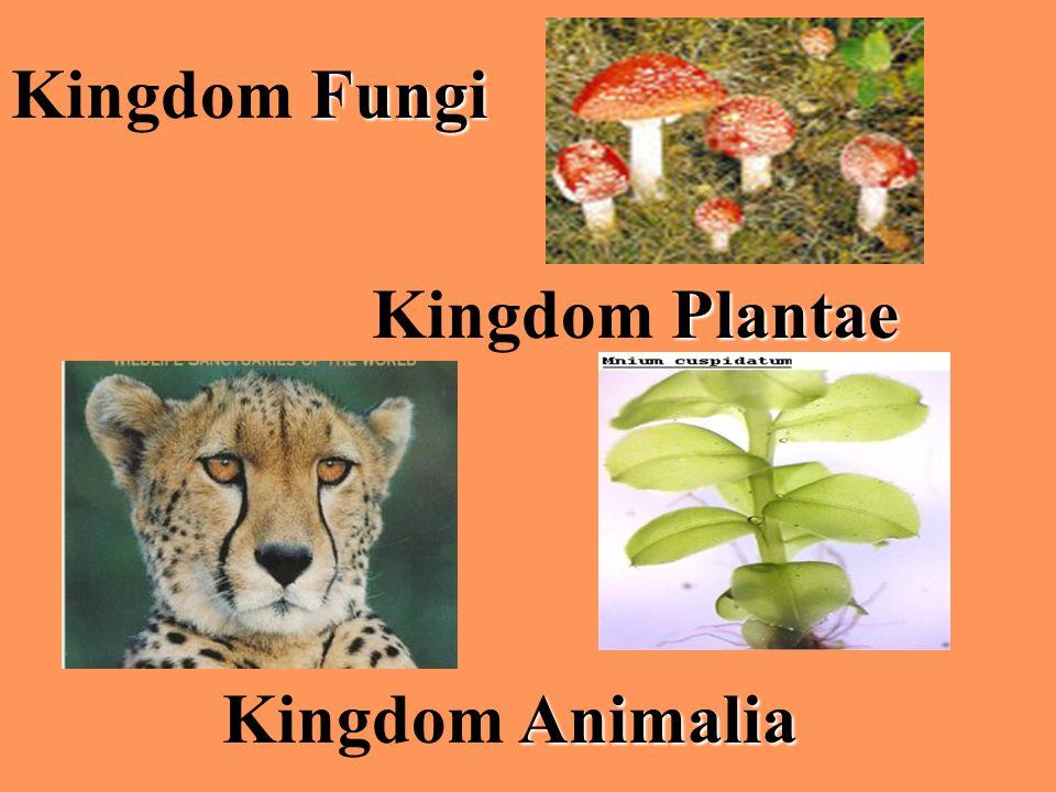 Animalia Kingdom Animalia Plantae Kingdom Plantae Fungi Kingdom Fungi