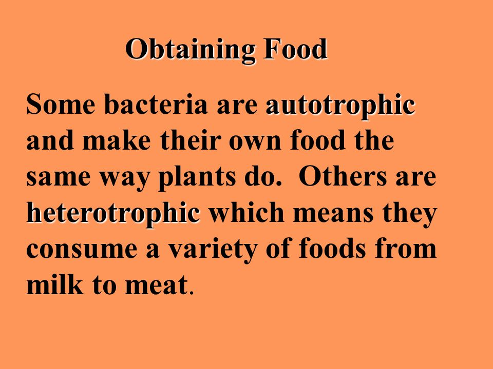 Obtaining Food autotrophic heterotrophic Some bacteria are autotrophic and make their own food the same way plants do. Others are heterotrophic which