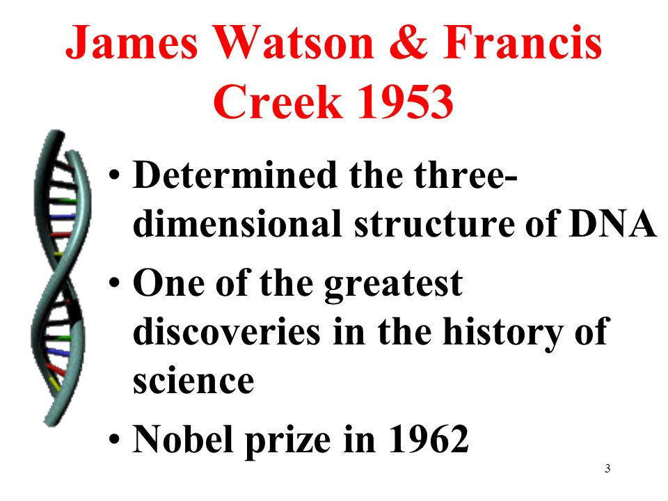 3 James Watson & Francis Creek 1953 Determined the three- dimensional structure of DNA One of the greatest discoveries in the history of science Nobel prize in 1962
