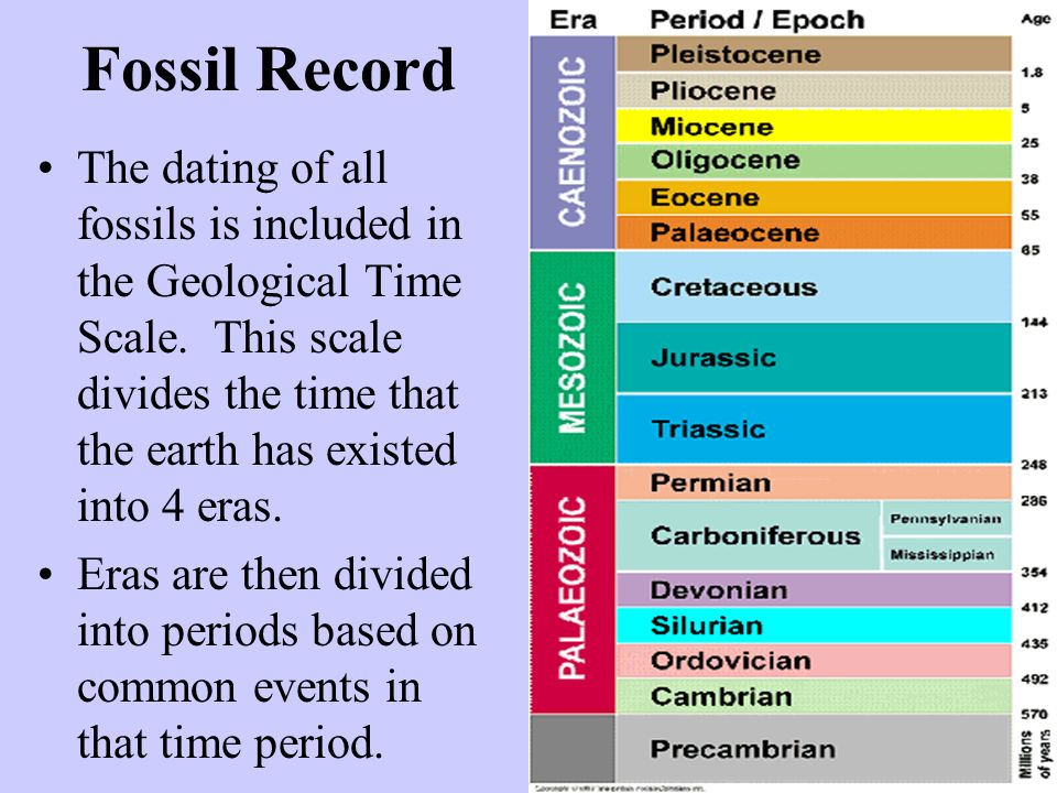Fossil Record The dating of all fossils is included in the Geological Time Scale. This scale divides the time that the earth has existed into 4 eras.